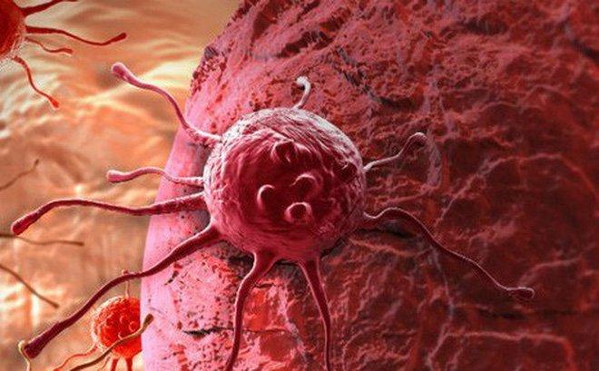 Cây sâm Ngọc Linh hạn chế ung thư