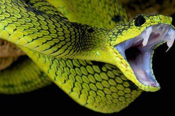 Bệnh cấp cứu rắn độc cắn