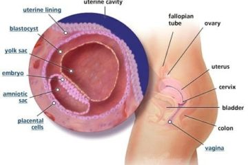 Tuần thứ 4 của thai kỳ