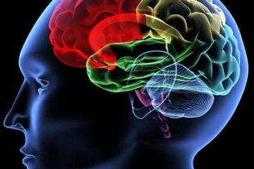10 sự thật về bộ não của trẻ vị thành niên