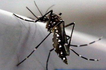Mỹ sử dụng máu nhân tạo để triệt sản muỗi