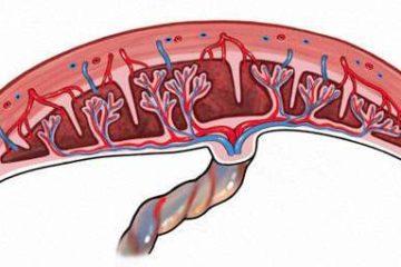 Rau cài răng lược – Nguy hiểm rình rập sản phụ