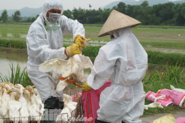 Bệnh cúm A H5N1