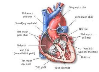 Bệnh viêm cơ tim rất nguy hiểm nhưng dễ bị bỏ qua