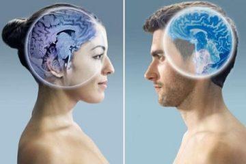 Bộ não của nam giới và nữ giới có sự khác nhau hoàn toàn