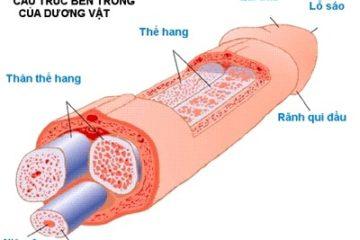Bộ phận sinh dục nam bao gồm 8 'chi tiết' thú vị