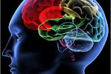 Chống lão hóa não bằng chế độ ăn kiểu vùng Địa Trung Hải