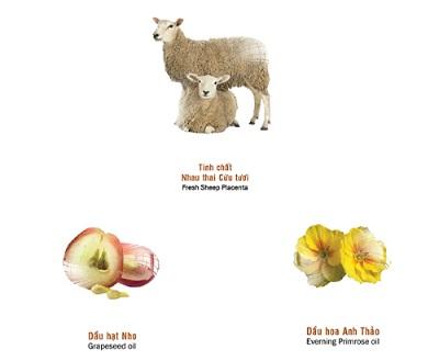nhau thai cừu chăm sóc da