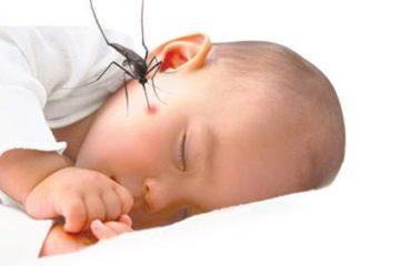 Bí quyết chữa côn trùng đốt cực kỳ hiệu quả cho trẻ