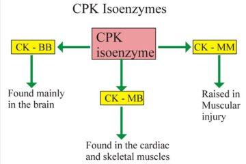 Xét nghiệm sinh hóa creatin phosphokinase trong máu