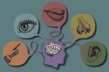 Bí mật về hệ giác quan của con người