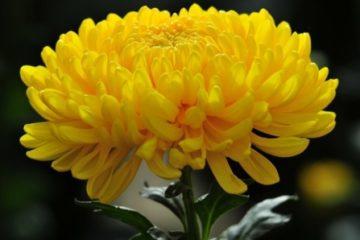 Bất ngờ với khả năng khử độc của 3 loài hoa Tết