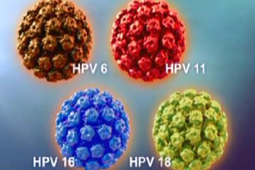 Một số câu hỏi về virus HPV
