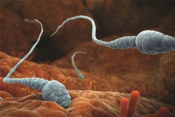 Các gốc oxy tự do gây tổn thương khả năng sinh sản nam giới