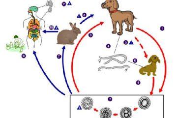 Chu kỳ và sinh bệnh học trong bệnh nhiễm ký sinh trùng