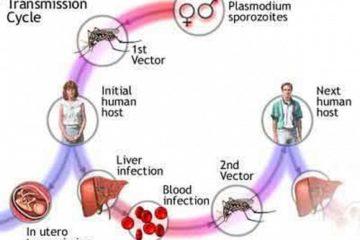 Bệnh sốt rét – ký sinh trùng sốt rét