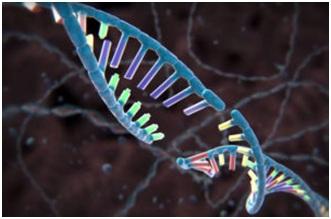 Mỹ: Loại bỏ hoàn toàn AIDS bằng phương pháp chỉnh sửa gen