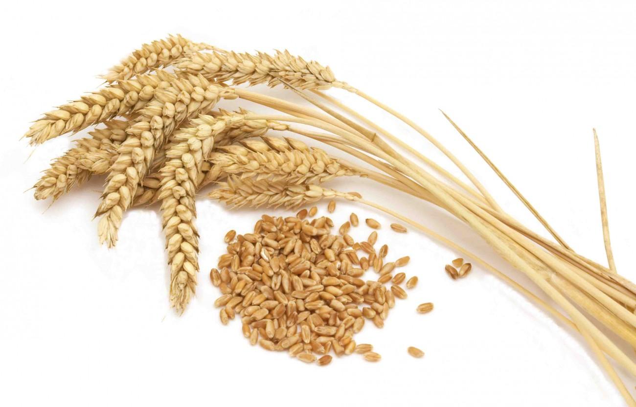 Lúa mạch làm tăng nguy cơ sảy thai