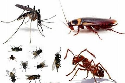 Các loại côn trùng có hại cho sức khỏe