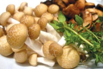 Tác dụng tuyệt vời của nấm hương và các loại nấm đối với sức khỏe