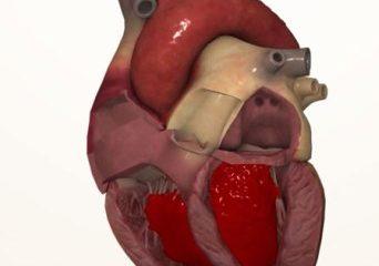 Số lít máu quả tim luân chuyển trong một phút là bao nhiêu?
