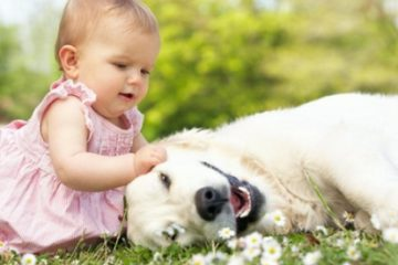 Nguy cơ trẻ bị nấm đầu khi chơi với chó, mèo