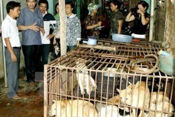Người Việt ăn thịt chó nhiều thứ 2 trên thế giới với 5 triệu con/năm