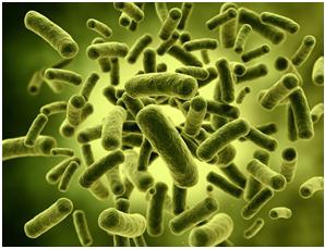 Nhật dùng lợi khuẩn sống điều trị viêm đại tràng