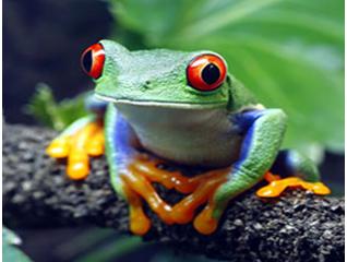 Phát hiện mới: Dịch tiết trên da ếch nhái có thể tiêu diệt cúm H1