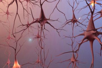 Bộ Não – cơ quan có nhiều quyền lực nhất