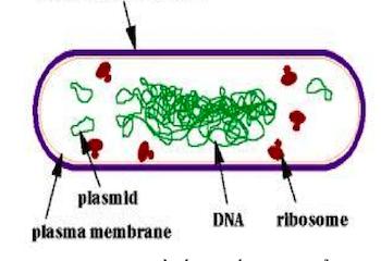 Đại cương về vi khuẩn học