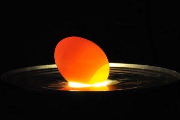 Cách chọn trứng gia cầm tránh nhiễm cúm A/H5N1