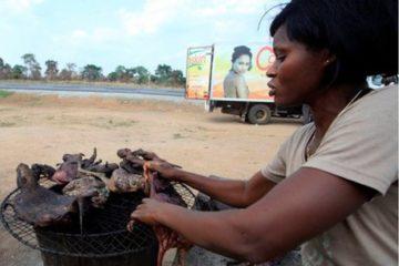 Tìm hiểu sâu hơn về dịch bệnh sốt xuất huyết Ebola