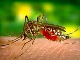 10 Bệnh dịch gây tử vong nhiều nhất