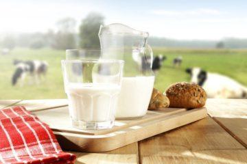 Có được thêm đường khi đang đun sữa bò hay không?
