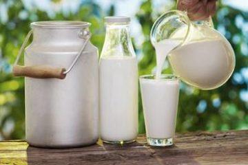 Uống sữa tươi thô gây bệnh cho cơ thể thậm chí tử vong