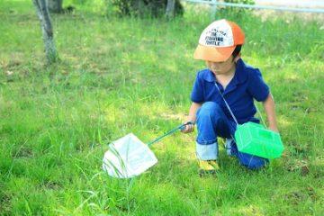 Tại sao người Nhật dùng côn trùng làm giáo cụ dạy trẻ