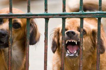 Theo dõi chó dại và các phương pháp phát hiện bệnh dại