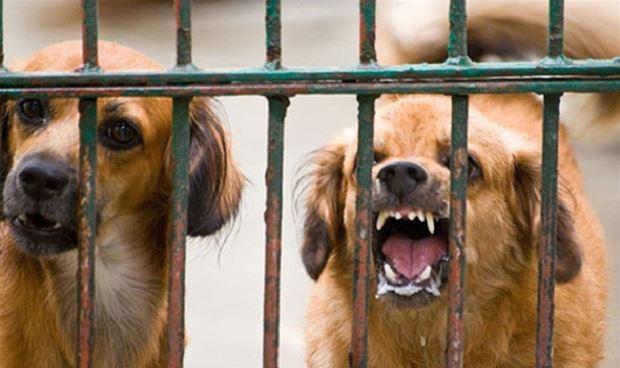 Chó bị nhốt