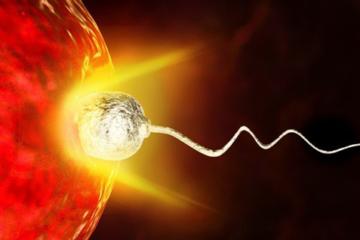 tinh trùng chui vào trứng