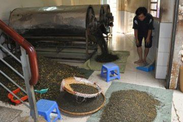 Trà tẩm ướp hóa chất độc hại tràn lan trên thị trường