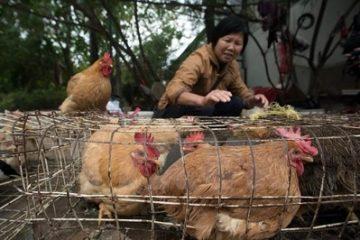 Trung Quốc liên tục phát hiện thêm các ca lây nhiễm cúm H7N9
