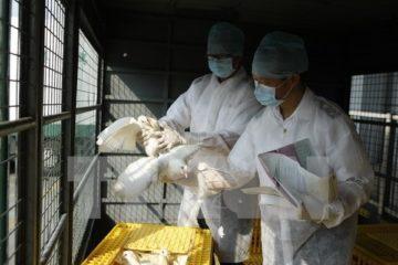 Trung Quốc đóng cửa hàng loạt chợ gia cầm sau khi phát hiện trường hợp nhiễm H7N9