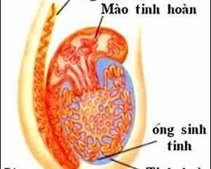 Những vấn đề cần lưu ý khi bị đau tinh hoàn và cách điều trị