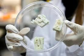 Bước đi mới: Phát triển thành công xương từ tế bào gốc ở mỡ