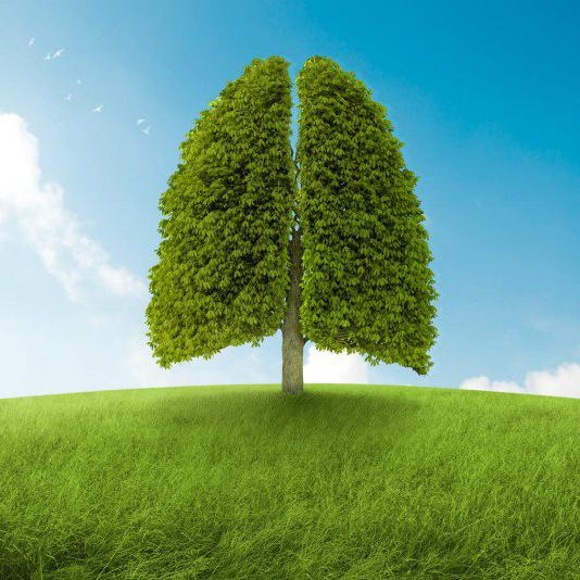 Thực phẩm giải độc và làm sạch phổi
