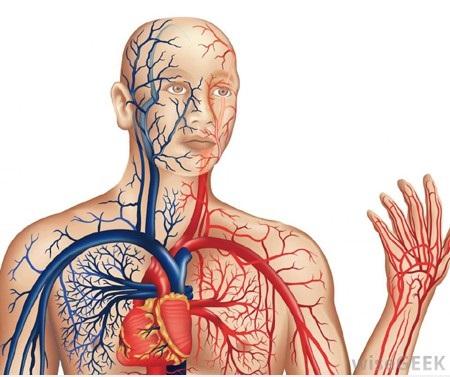 Lưu thông tuần hoàn máu não