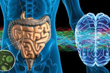 Mối liên hệ khó tin giữa các bệnh thần kinh với hệ vi sinh vật đường ruột
