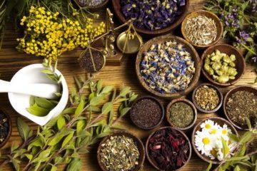 Xu hướng quay trở lại sử dụng thảo dược thiên nhiên trên toàn thế giới