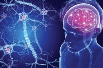 Hé lộ vai trò quan trọng của các vi sinh vật đường ruột trong bệnh đa xơ cứng